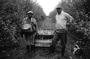 Tony Loreti, Farmworkers, Harvard, MA (gelatin silver print)