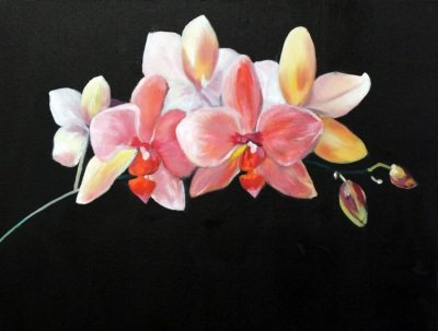Aldis Elfarsdottir, Orchids, oil